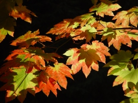 Don't see the leaves in your yard as a nuisance. View them as an exercise plan to get in shape.