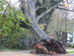 Trees that grow near power lines can be dangerous and cause power outages.