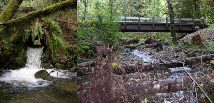 Before (left) and after photos show how a culvert replacement in Thurston County opened up this Black River tributary to more fish. Photo: DNR/DFW/RCO/Project Sponsors