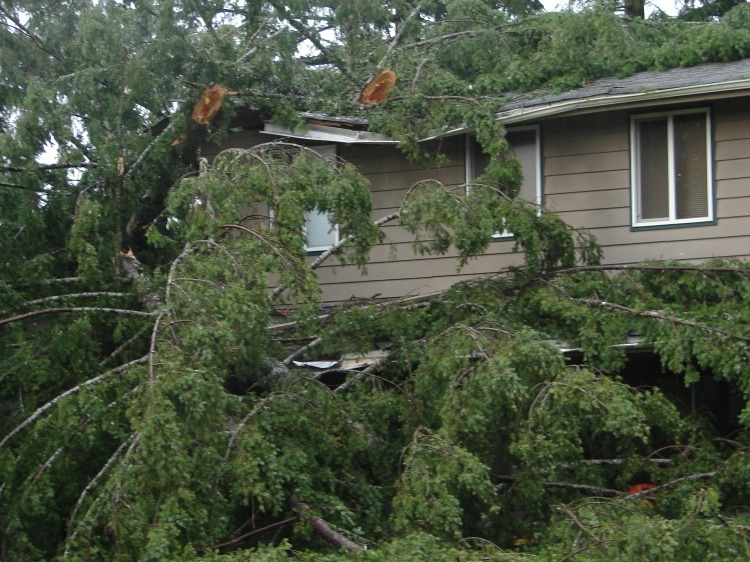 What a mess! Storms can wreak havoc on trees, especially when they're near homes. Photo DNR