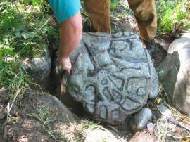 DNR archaeologist Maurice Major inspects the Calawah rock in October. DNR Photo.