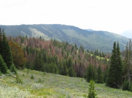 DNR continues to seek funding to restore forest health and prevent wildfires in Washington.