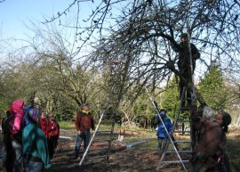 Learn how to prune properly by taking a class.  Photo to DNR
