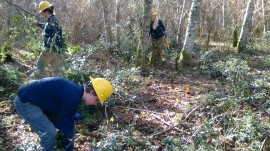 Washington Conservation Crews help remove English Holly from Upright Channel. Photo: DNR