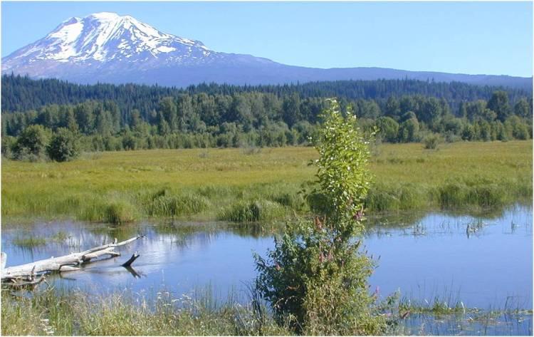 trout-lake