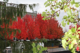 Puget SoundCorps crews can make your city look like this in the fall. Photo: Janet Pearce/DNR