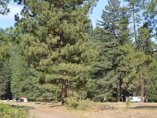 teanaway_campground