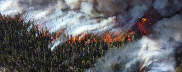 wildfire- su.jpg