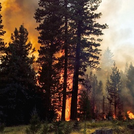 Cougar Creek Fire, which started Aug. 10, 2015 by lightning, scorched 53,532 acres near Mount Adams. Photo Joe Smillie/DNR