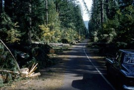 The 1962 storm brought hurricane-level winds to Washington. Photo courtesy of Washington State Archives