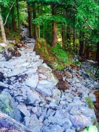 Dirty Harry's Peak trail