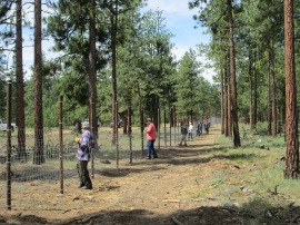 Volunteers building elk fence at BBQ Flats. Photo/ DNR.