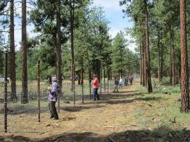 Volunteers building elk fence at BBQ Flats. Photo/ DNR.