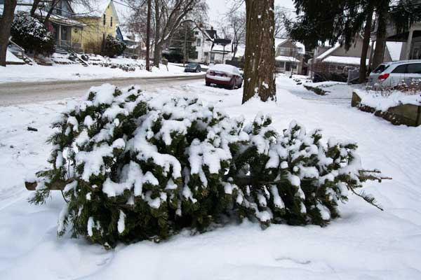 Christmas tree on the curb. Photo: Steven Depolo/Creative Commons