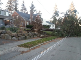 A downed ponderosa pine in Spokane results in power outage and street closure. Photo by Jim Flott