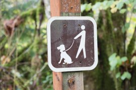 Remember to keep your dog on a leash on DNR-managed lands. Photo/ DNR.