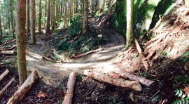 The Master Link Trail, East Tiger Mountain's newest trail opens today. Photo/ DNR.