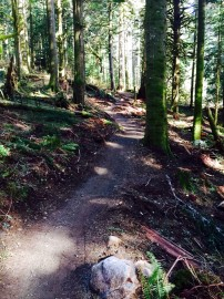 The connection trail is 2.8 miles, bringing East Tiger Mountain's trail system to nearly 20 miles. Photo/ DNR.