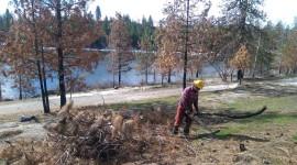 A Washington Conservation Corps crew member removes hazardous trees. Photo/ DNR.