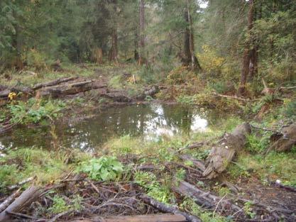 wetlandphoto1