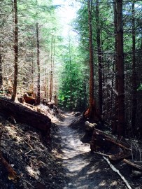A preview of future mountain bike trails in Raging River State Forest. Photo/ DNR.
