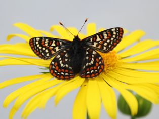 taylorcheckerspot