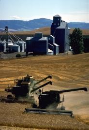 Combines harvest wheat grown in rich loess soil near Dusty.