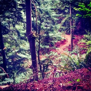 new trails for mountain bikes at West Tiger Mountain State Forest