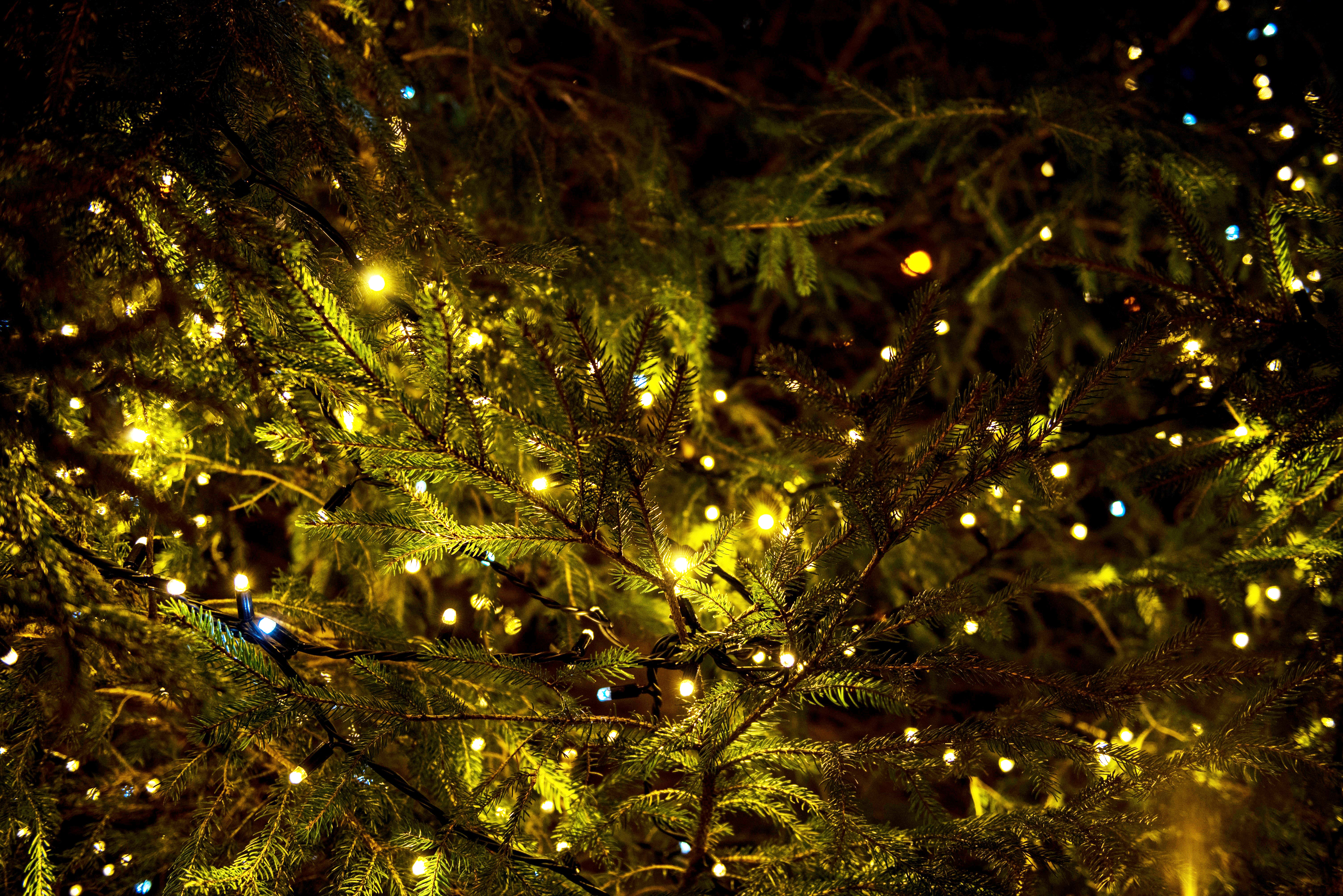 Timely Tree Tips Lights On Trees Ear To The Ground With Dnr