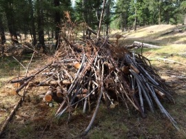 brush pile for habitat