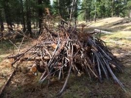 brush pile for habitat