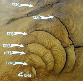 Burn scars in cross section of a giant sequoia
