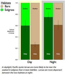 eelgrass chart