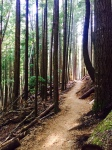 Inside Passage mountain bike trail.