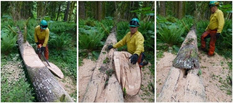Creating a habitat log