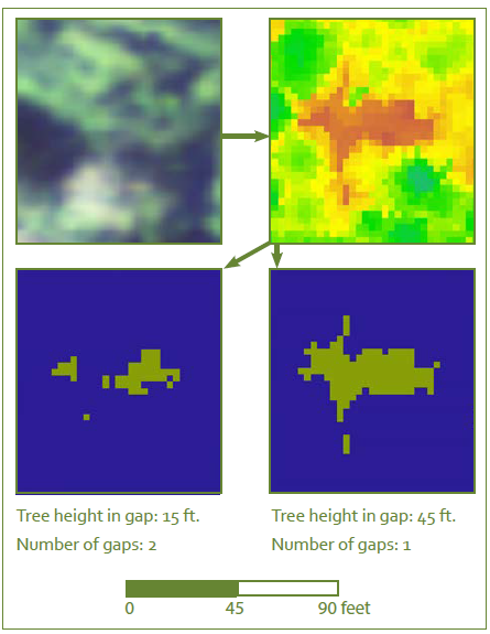 Delineating a canopy gap in an old-growth forest