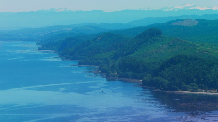 kelp coast.jpg