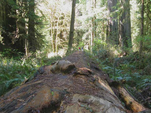 Gap created by a fallen old-growth tree