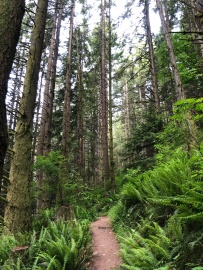 A series of trails winds through the Blanchard State Forest in Skagit County. The core of the forest is being conserved as part of a Legislature-funded plan, and replacement working forests have been acquired nearby. (Photo by Ashli Blow, DNR)