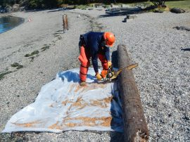 A worker segments a polluting piling removed from Washington's waters so that it can be removed from the beach. (DNR photo)