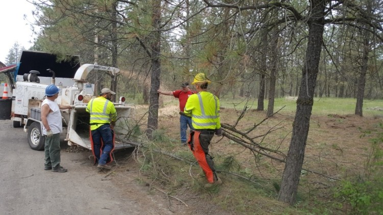 Veterans run tree limbs through wood chipper