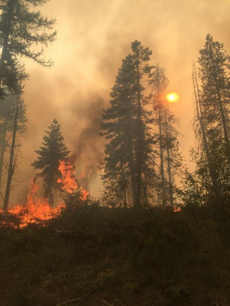 During parts of Boyds Fire, in the Colville area, low-hanging branches and an overabundance of tree saplings provided ladder fuels for fire to spread into the forest's canopy, growing the fire more rapidly