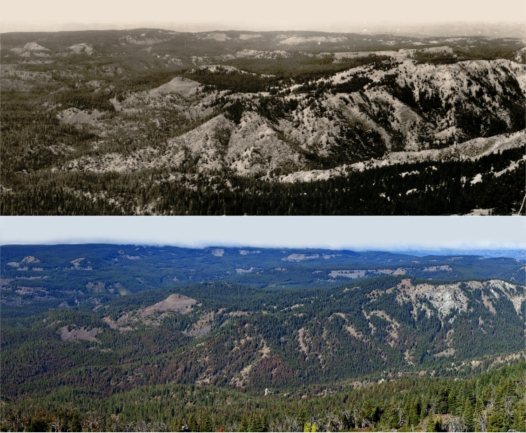 The upper photo, taken in 1934 in the Kittitas County area before excluding fire from the ecosystem, shows a more resilient forest (Photo by Reino R. Sarlin/USDA Forest Service). The lower photo of the same area, taken in 2010 after constant fire suppression, shows an over-crowded forest (Photo by John F. Marshall)